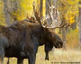 Yellowstone & Grand Teton National Parks - Sept. 2012
