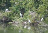 cranes nesting