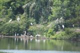 crane nesting area