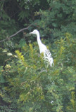 baby crane