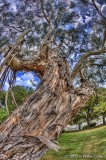 City Hall Tree 3 HDR.jpg