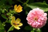 BeeFlowersEF50mm.jpg