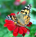 ButterflyFlower17-40.jpg