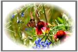 ButterflyFlowers.jpg