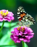 ButterflySept3.jpg