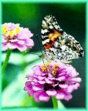 ButterflyWatercolor.jpg