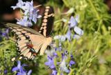 Butterfly100MacroMay21.jpg