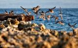 birds at the pier