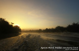 Sunrise and morning mist in Agusan Marsh