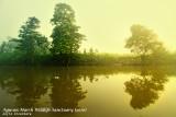 Agusan Marsh on a misty morning