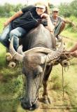 Carabao ride in North Cotabato