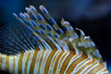 tomasz pawelek- budapest aquarium - 001.jpg