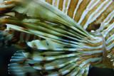 tomasz pawelek- budapest aquarium - 002.jpg