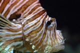 tomasz pawelek- budapest aquarium - 003.jpg