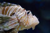 tomasz pawelek- budapest aquarium - 004.jpg