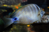 tomasz pawelek- budapest aquarium - 005.jpg