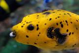 tomasz pawelek- budapest aquarium - 007.jpg