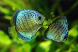 tomasz pawelek- budapest aquarium - 009.jpg