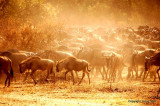 migration_in_serengeti