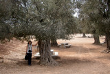 Judy next to an olive tree in the Zippori National Park.