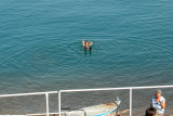 Judy floating in the Dead Sea - arms up in the air - impossible to sink because of the salt concentration.