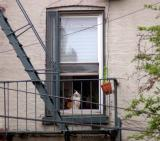 A cat checking it all out, Cobble Hill, Brooklyn
