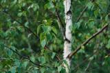 Flora: plants & trees