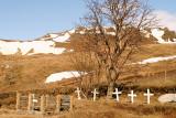 Reyniviðurinn bíður sumars