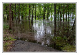 Floods at Long Hunter State Park