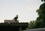 Sandford Sea Eagle