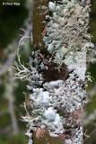 2511-lichen.jpg