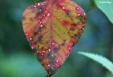 2638-leaf.jpg