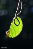 2774-leaf.jpg
