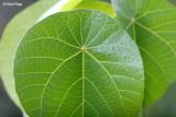 3070-leaves.jpg