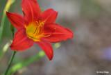3078-red-flower.jpg