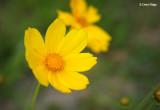 3101-yellow-flowers.jpg