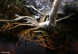 3117-roots-dk-water.jpg