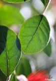3122-leaves.jpg