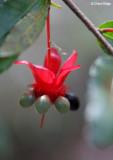 3123-red-flower.jpg