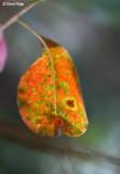 3124-leaf.jpg