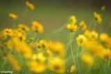 3185-yellow-flowers.jpg