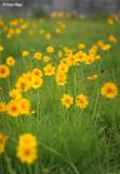 3189-yellow-flowers.jpg