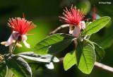 3321-red-flowers.jpg