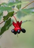 3342-red-flower.jpg