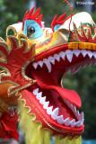 7910-dragon.jpg