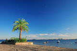 spain palm trees and boats 4.jpg