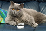 jas has now taken to texting other cats, i think she's got a liberty, i mean its not even her phone!!!
