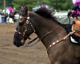 Drill Team horse                 MG_3980a.jpg