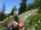 Trail Clearing crew on Goat Mtn