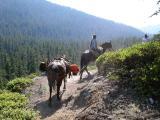 Trail crew at the Vanson Ridge trail overlook